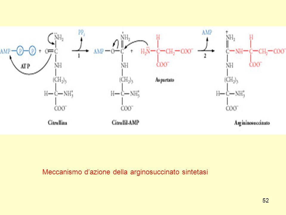 Meccanismo d'azione della arginosuccinato sintetasi