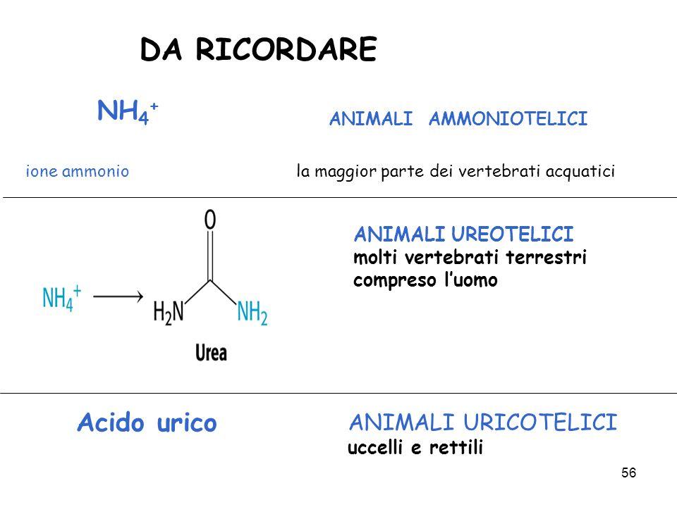 DA RICORDARE NH4+ ANIMALI AMMONIOTELICI Acido urico
