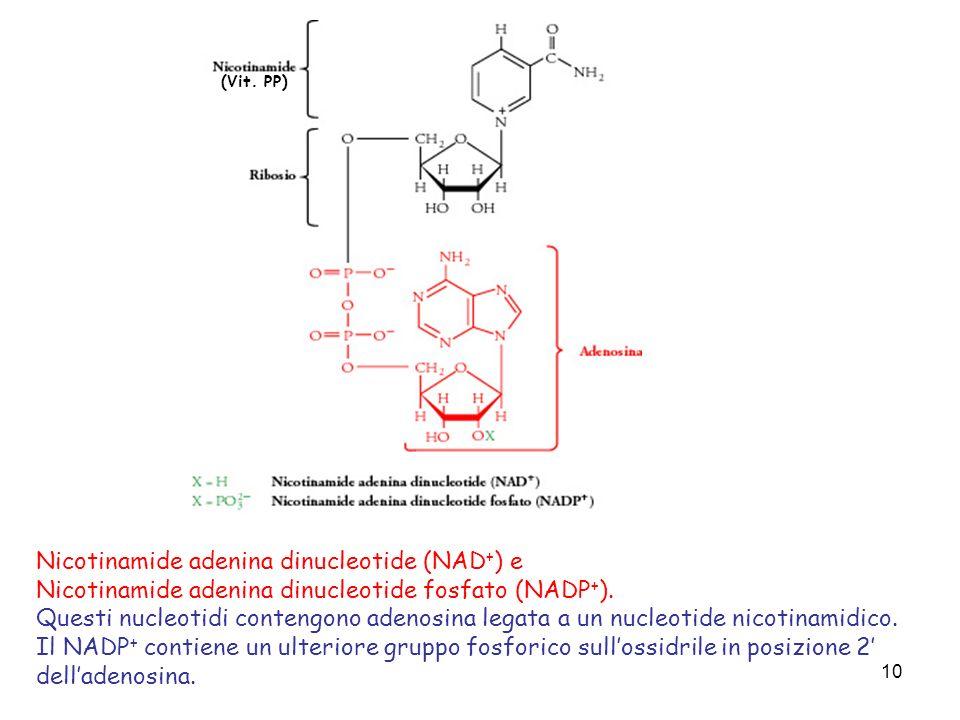 Nicotinamide adenina dinucleotide (NAD+) e