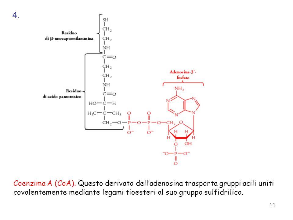 4. Coenzima A (CoA).