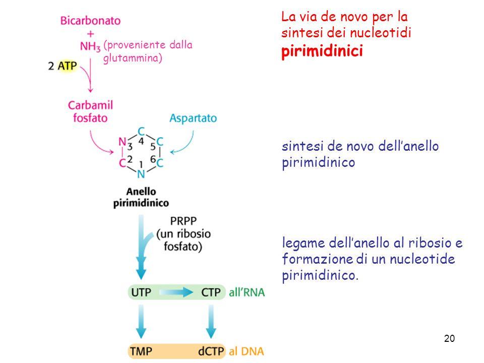 La via de novo per la sintesi dei nucleotidi pirimidinici