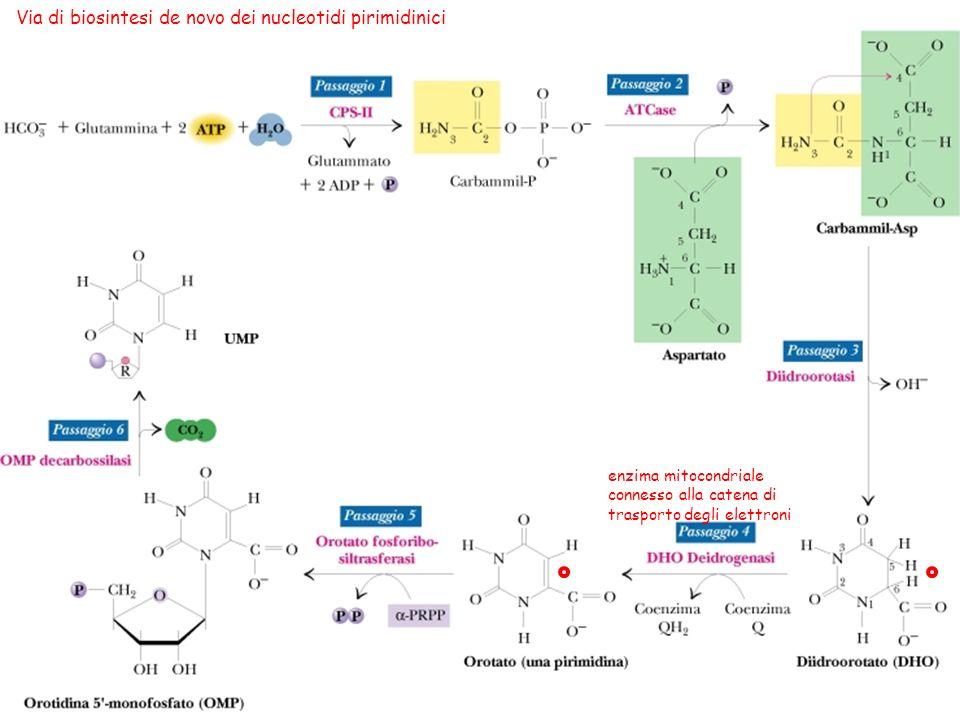 Via di biosintesi de novo dei nucleotidi pirimidinici