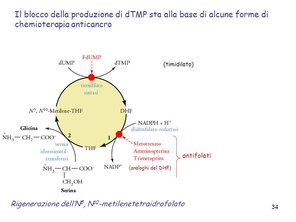 Il blocco della produzione di dTMP sta alla base di alcune forme di