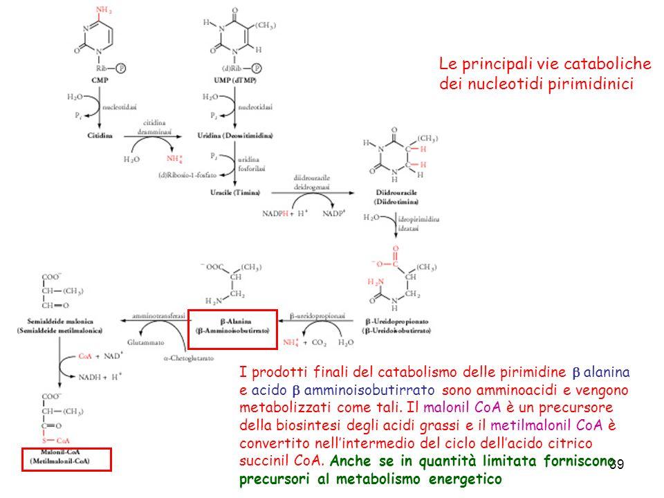 Le principali vie cataboliche dei nucleotidi pirimidinici