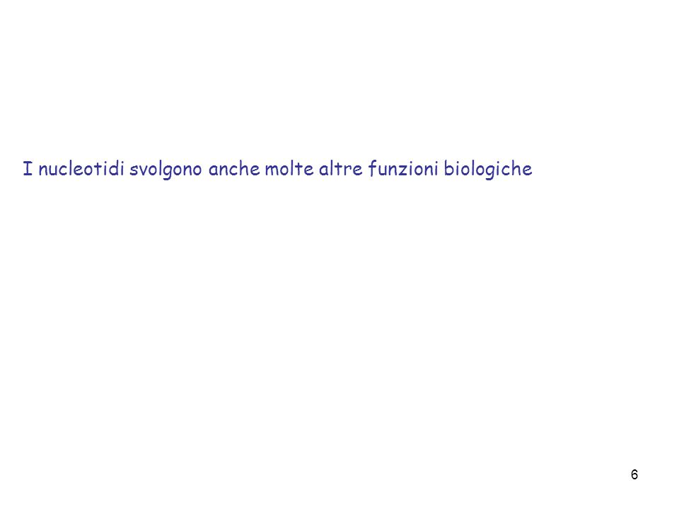 I nucleotidi svolgono anche molte altre funzioni biologiche