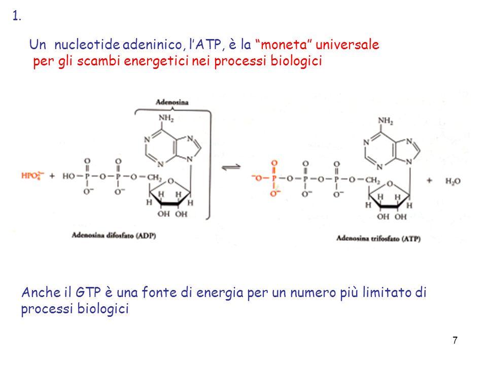 1. Un nucleotide adeninico, l'ATP, è la moneta universale. per gli scambi energetici nei processi biologici.