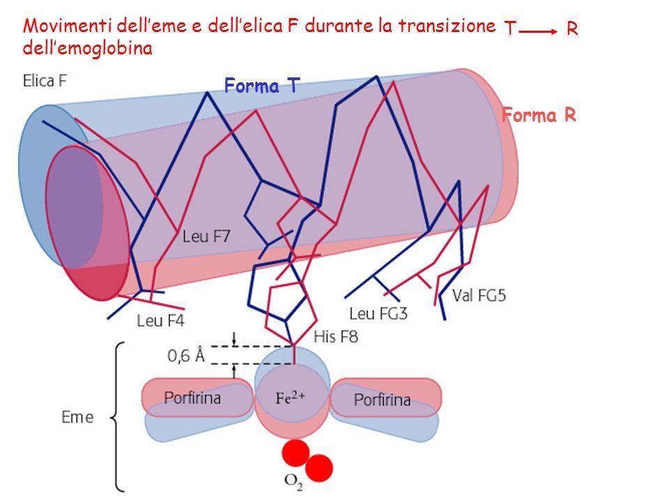 Movimenti dell'eme e dell'elica F durante la transizione