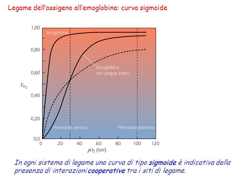 Legame dell'ossigeno all'emoglobina: curva sigmoide