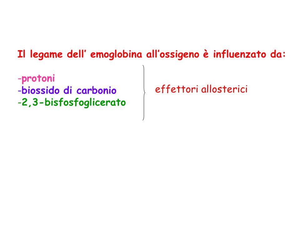 Il legame dell' emoglobina all'ossigeno è influenzato da: