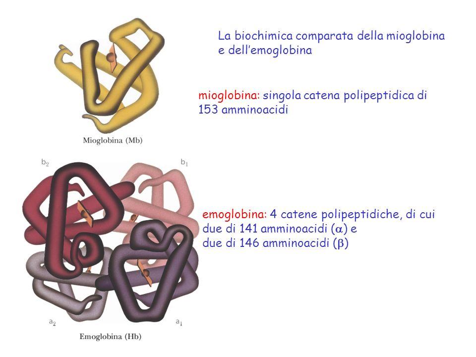 La biochimica comparata della mioglobina