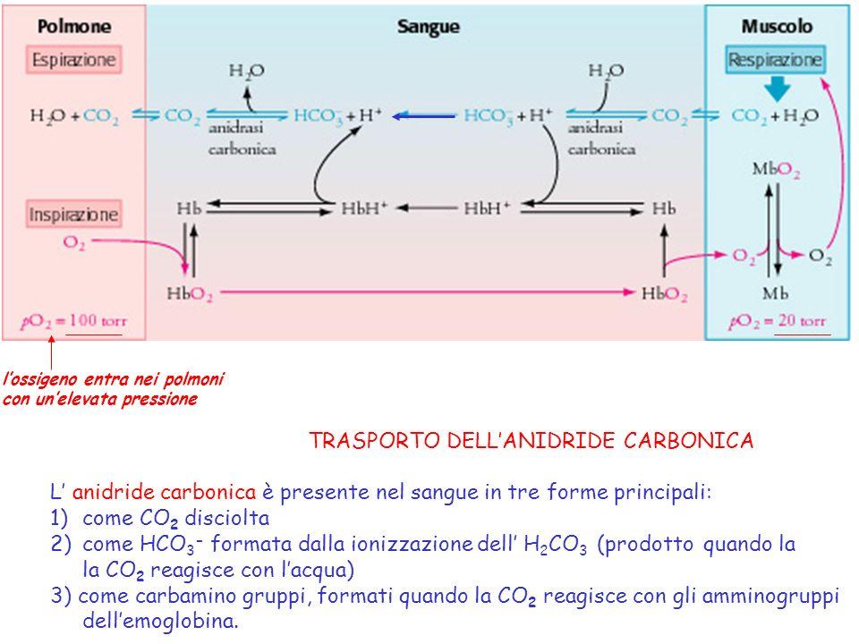 TRASPORTO DELL'ANIDRIDE CARBONICA
