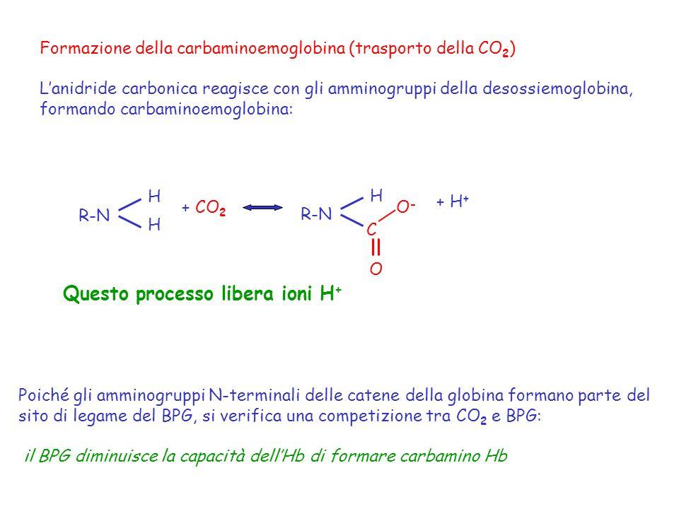 Questo processo libera ioni H+