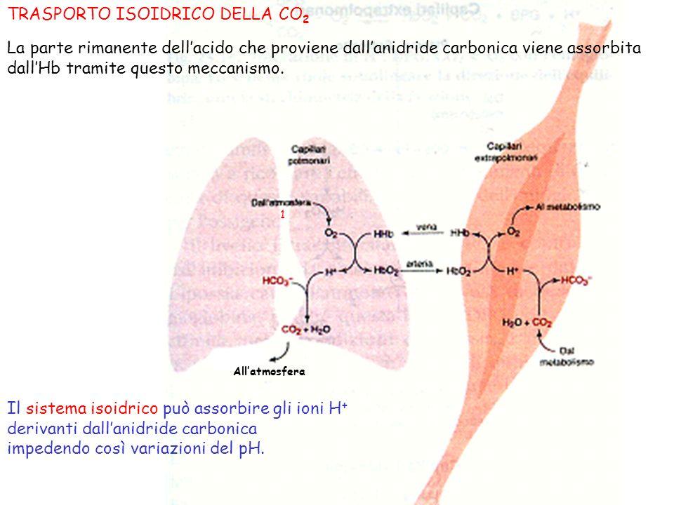 TRASPORTO ISOIDRICO DELLA CO2