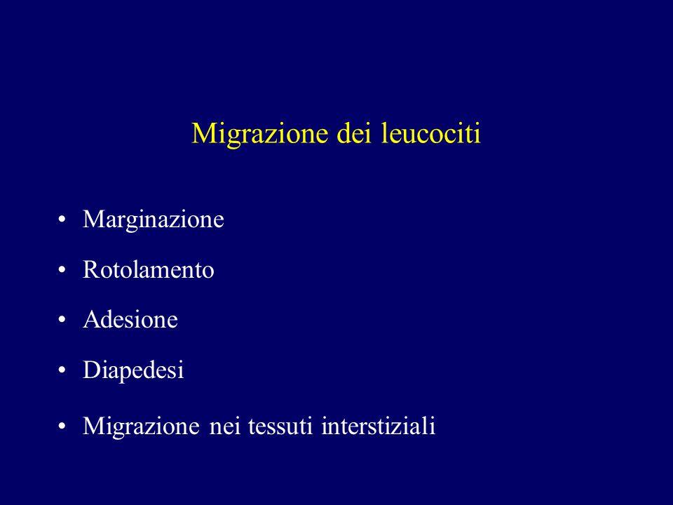 Migrazione dei leucociti