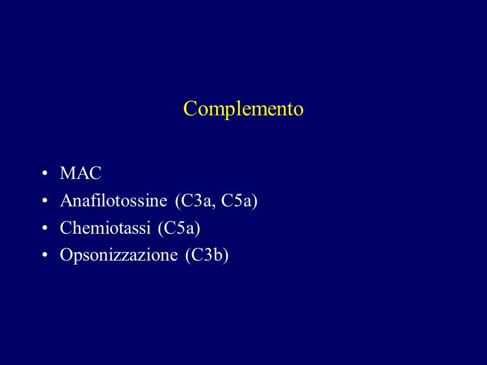 Complemento MAC Anafilotossine (C3a, C5a) Chemiotassi (C5a)