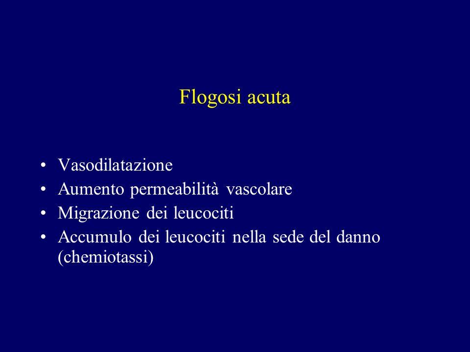 Flogosi acuta Vasodilatazione Aumento permeabilità vascolare