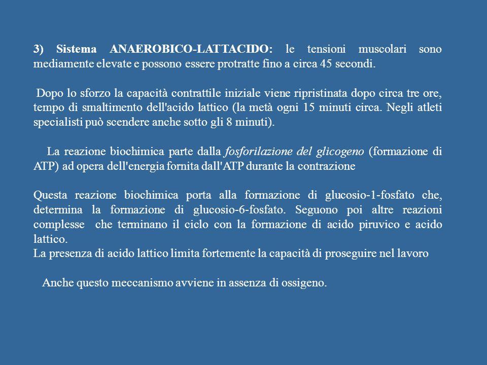 3) Sistema ANAEROBICO-LATTACIDO: le tensioni muscolari sono mediamente elevate e possono essere protratte fino a circa 45 secondi.