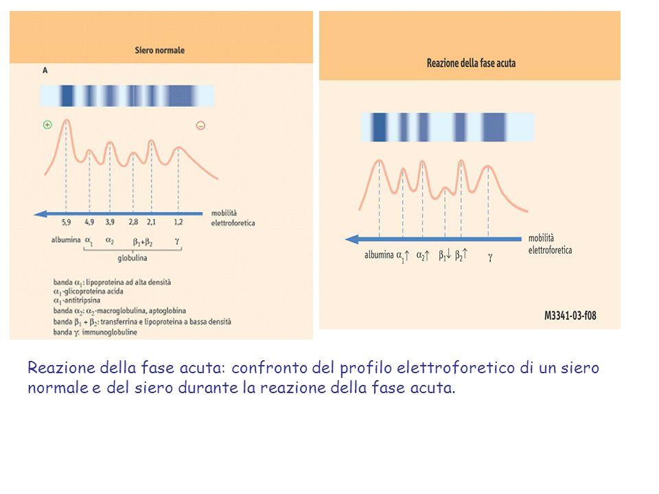 Reazione della fase acuta: confronto del profilo elettroforetico di un siero