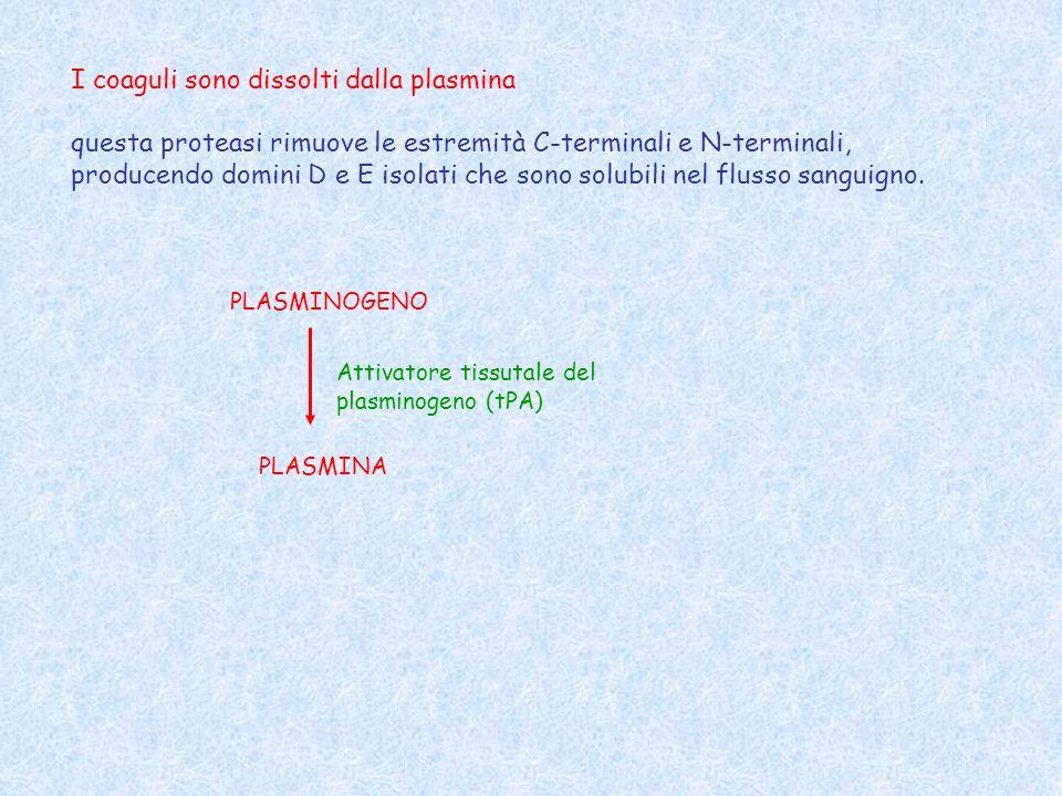 I coaguli sono dissolti dalla plasmina