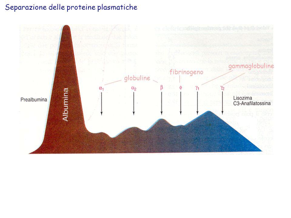 Separazione delle proteine plasmatiche