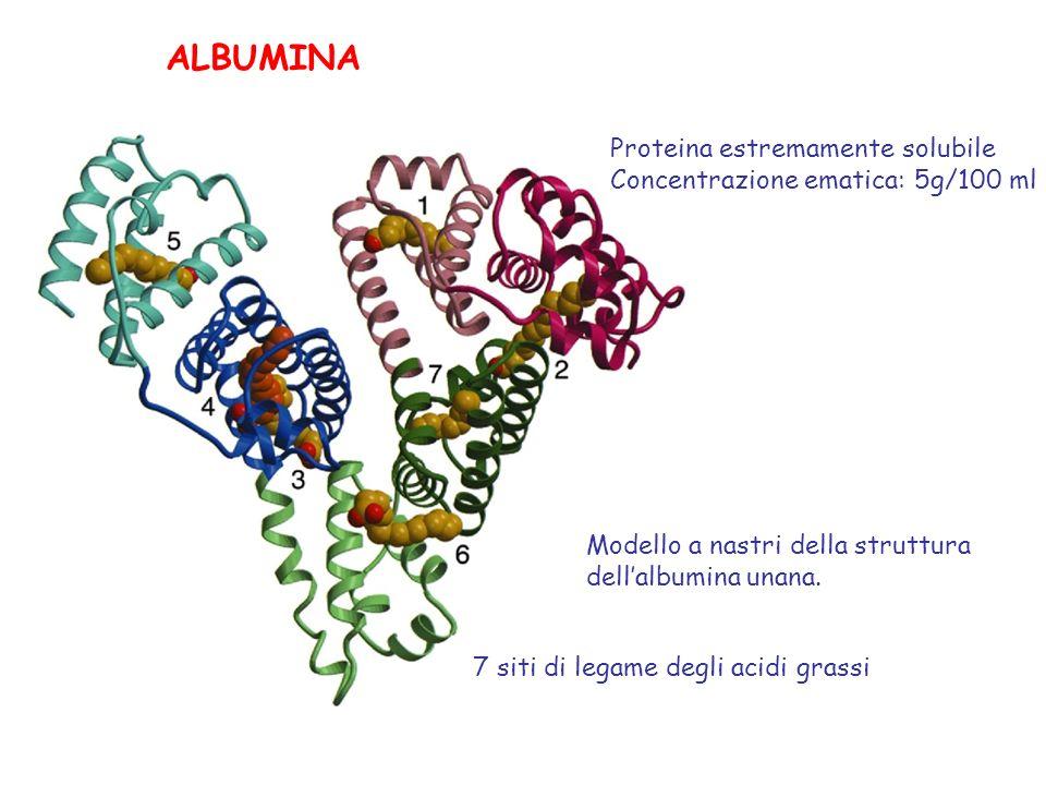 ALBUMINA Proteina estremamente solubile
