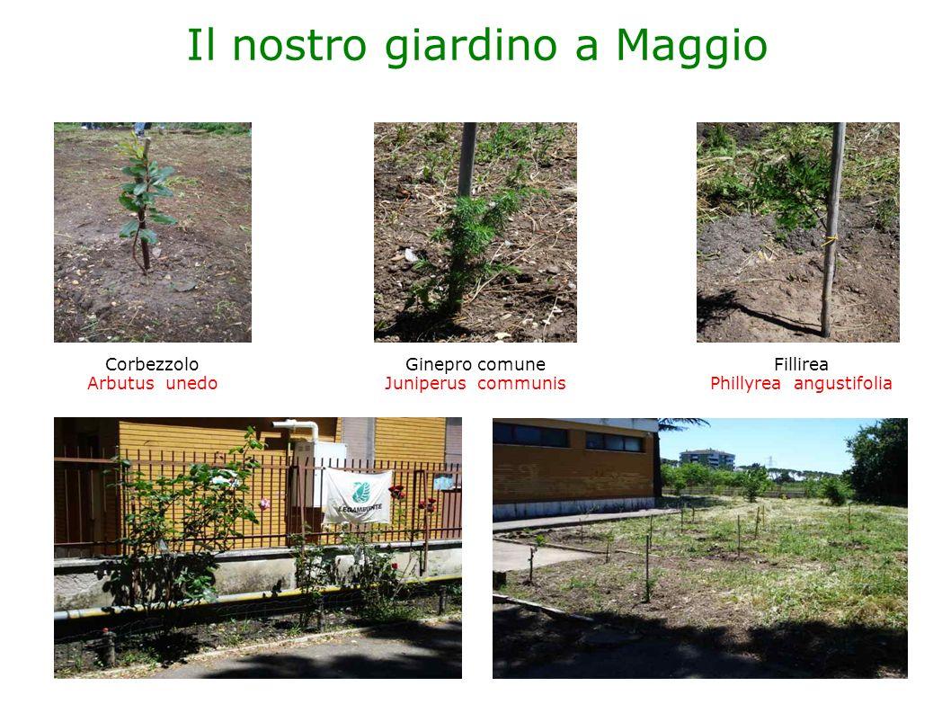 Il nostro giardino a Maggio