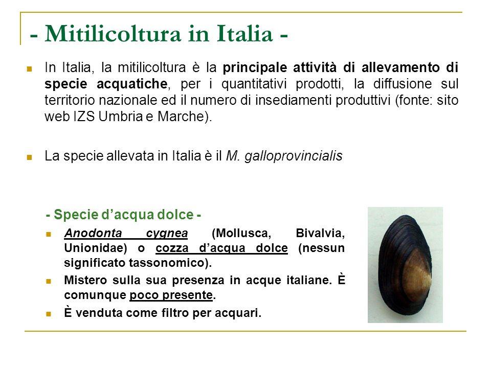 - Mitilicoltura in Italia -
