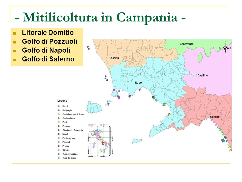 - Mitilicoltura in Campania -