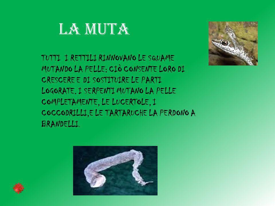 LA MUTA