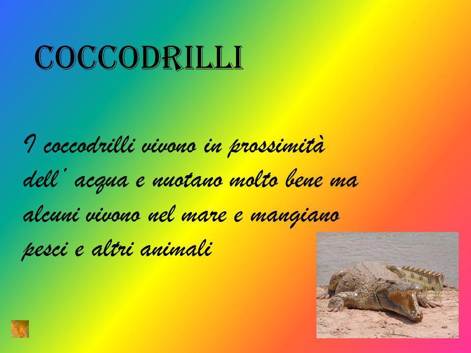 coccodrilli I coccodrilli vivono in prossimità dell' acqua e nuotano molto bene ma alcuni vivono nel mare e mangiano pesci e altri animali.