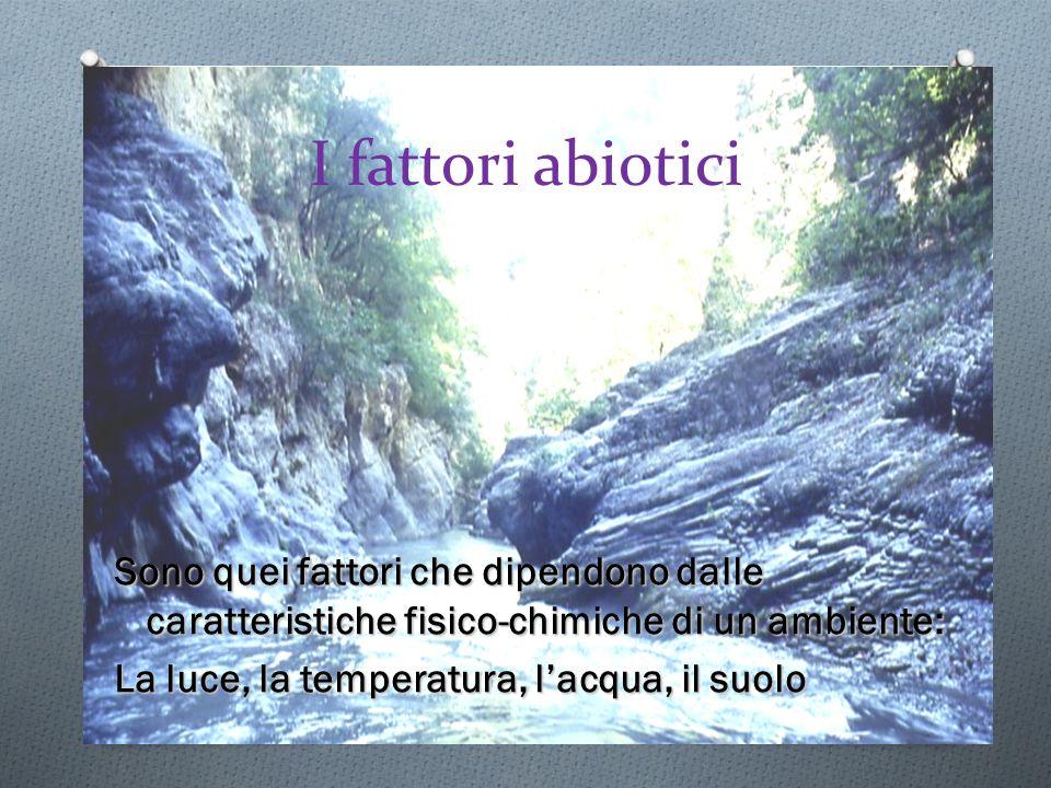I fattori abiotici Sono quei fattori che dipendono dalle caratteristiche fisico-chimiche di un ambiente: