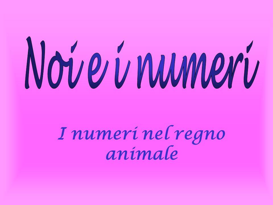 I numeri nel regno animale