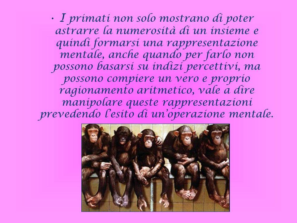 I primati non solo mostrano di poter astrarre la numerosità di un insieme e quindi formarsi una rappresentazione mentale, anche quando per farlo non possono basarsi su indizi percettivi, ma possono compiere un vero e proprio ragionamento aritmetico, vale a dire manipolare queste rappresentazioni prevedendo l'esito di un'operazione mentale.
