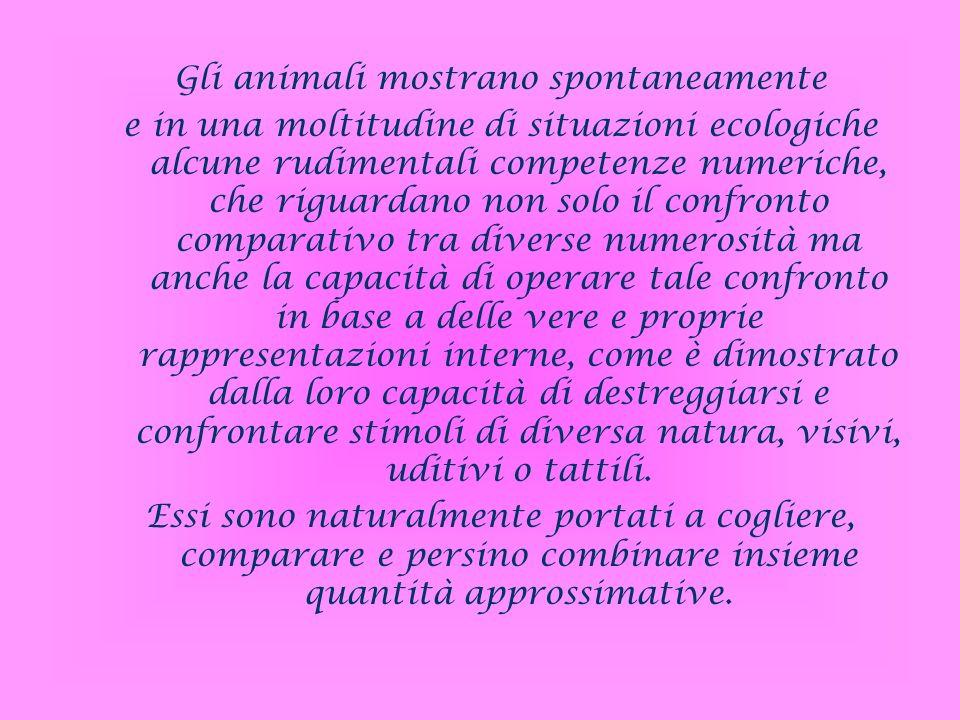 Gli animali mostrano spontaneamente