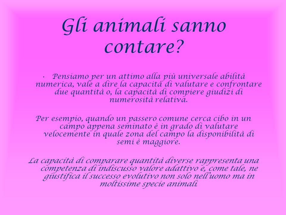 Gli animali sanno contare