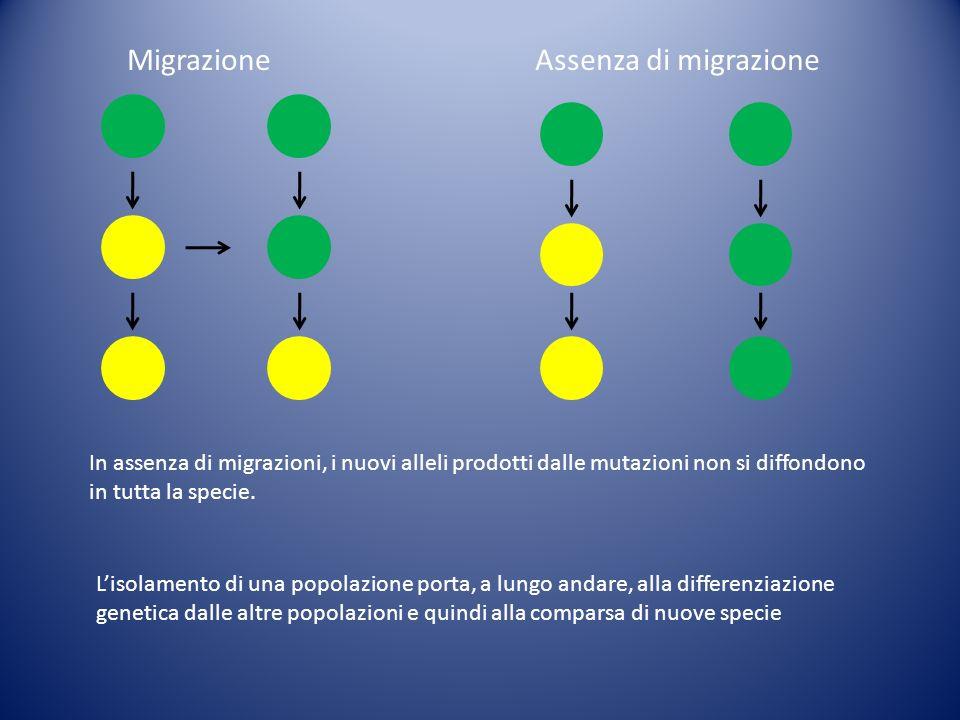Migrazione Assenza di migrazione