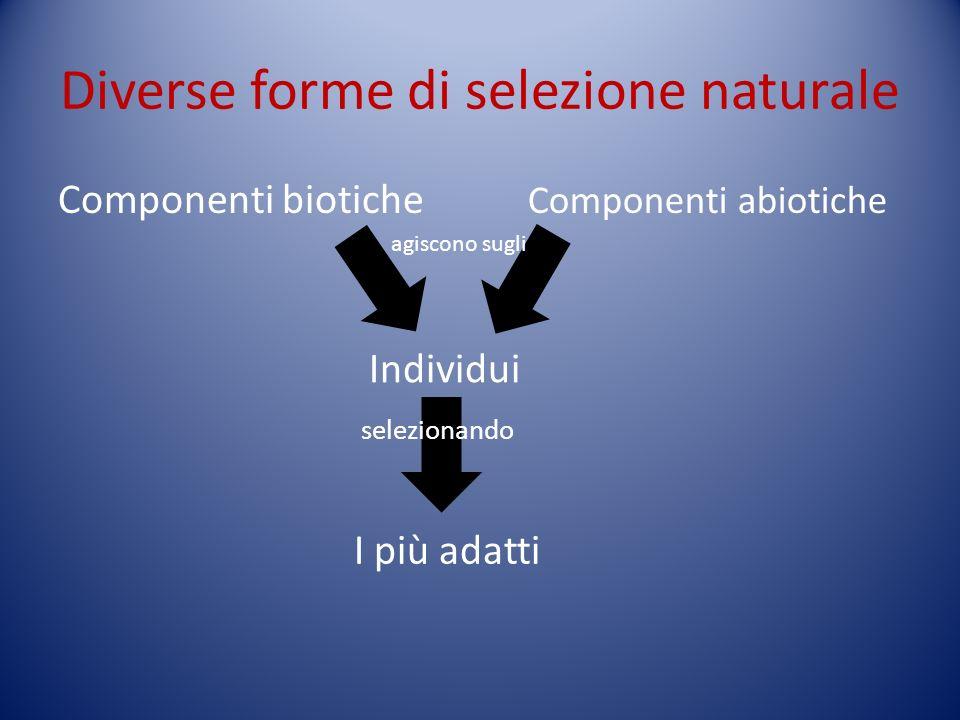 Diverse forme di selezione naturale