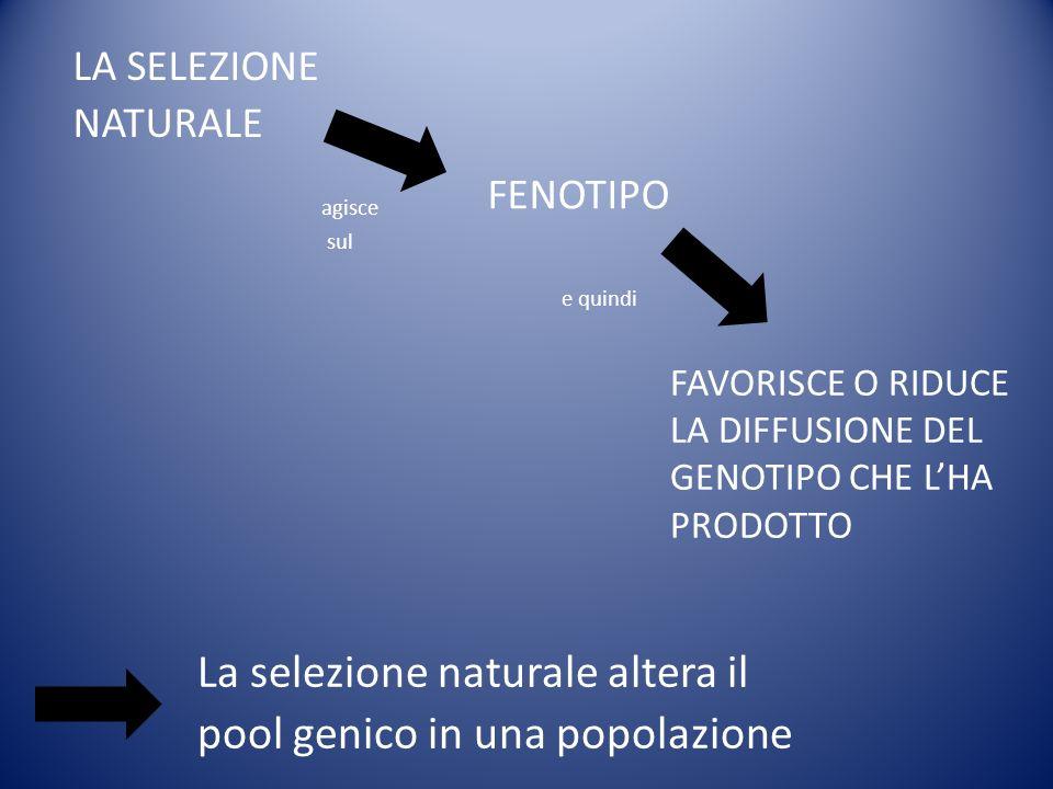 La selezione naturale altera il pool genico in una popolazione
