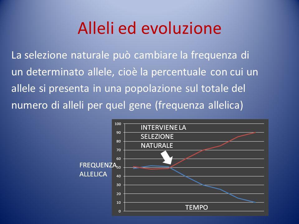Alleli ed evoluzione