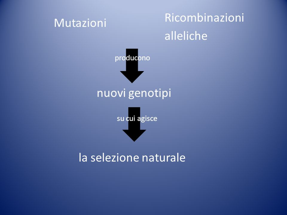 Ricombinazioni Mutazioni alleliche nuovi genotipi
