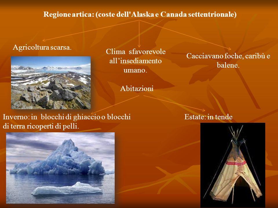 Regione artica: (coste dell Alaska e Canada settentrionale)