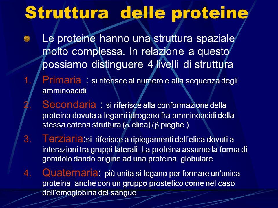 Struttura delle proteine