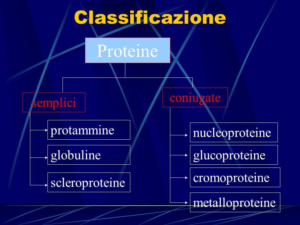 Classificazione Proteine coniugate semplici protammine nucleoproteine
