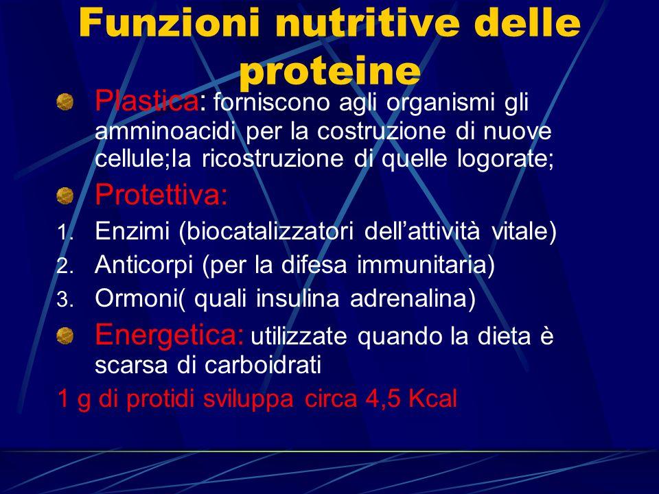 Funzioni nutritive delle proteine