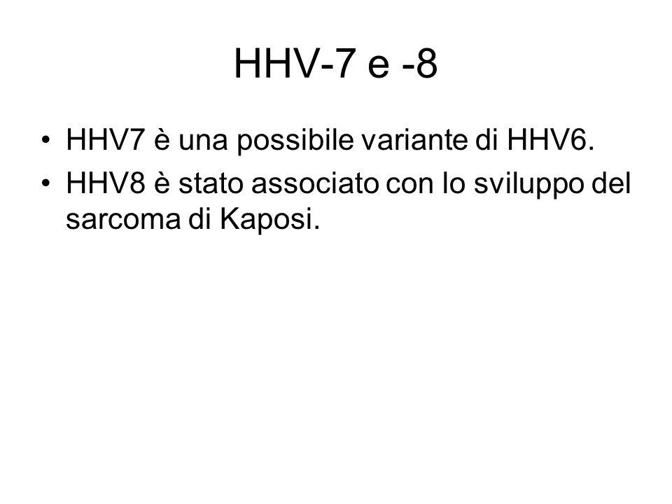 HHV-7 e -8 HHV7 è una possibile variante di HHV6.