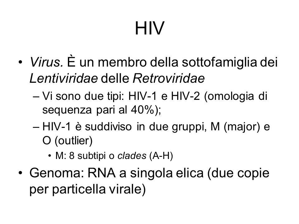 HIV Virus. È un membro della sottofamiglia dei Lentiviridae delle Retroviridae. Vi sono due tipi: HIV-1 e HIV-2 (omologia di sequenza pari al 40%);