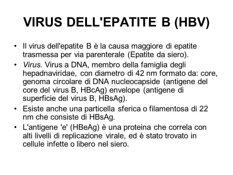 VIRUS DELL EPATITE B (HBV)