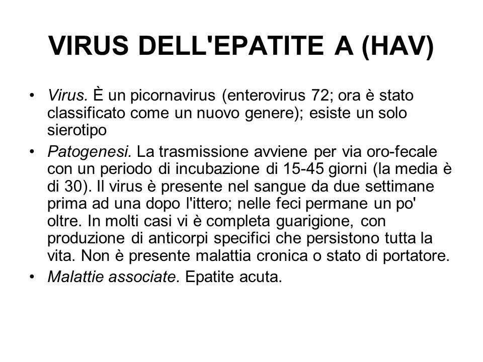 VIRUS DELL EPATITE A (HAV)