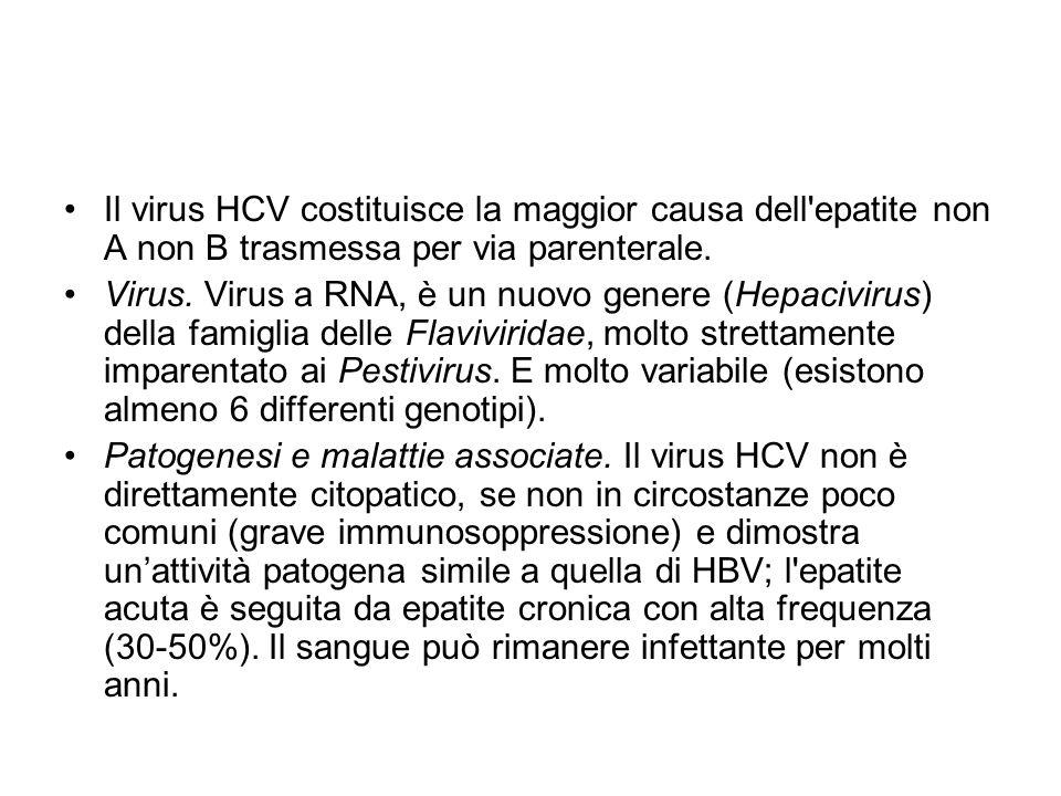 Il virus HCV costituisce la maggior causa dell epatite non A non B trasmessa per via parenterale.