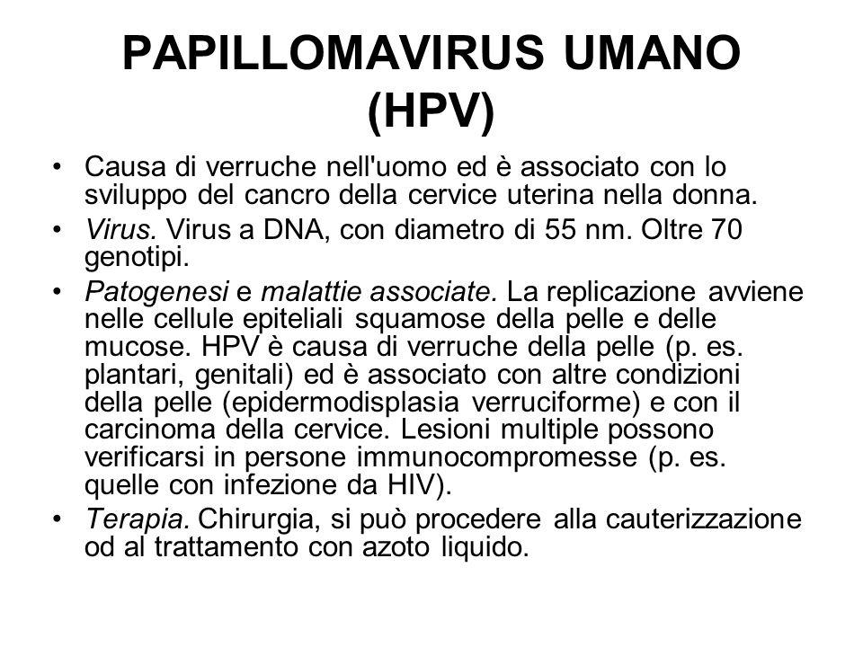 PAPILLOMAVIRUS UMANO (HPV)